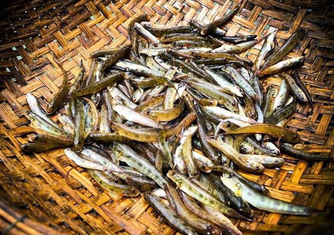 10 đặc sản Lai Châu ăn một lần là nhớ suốt đời - 10