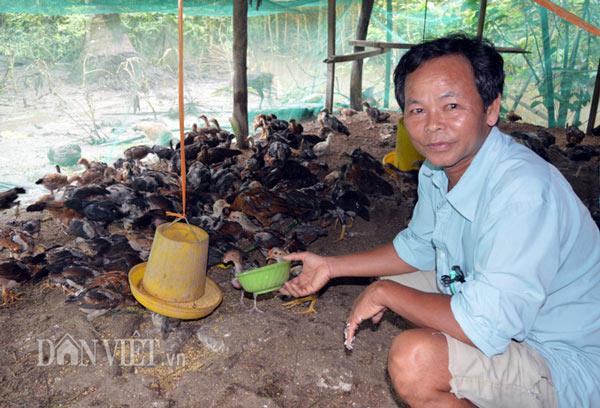 Làm giàu từ chăn nuôi: Gà thả vườn trên đệm sinh học, chưa thấy ế - 1