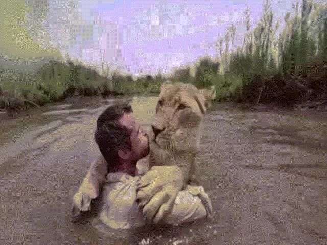 """Sư tử trên bờ """"vồ"""" người đàn ông giữa sông và diễn biến không ngờ"""