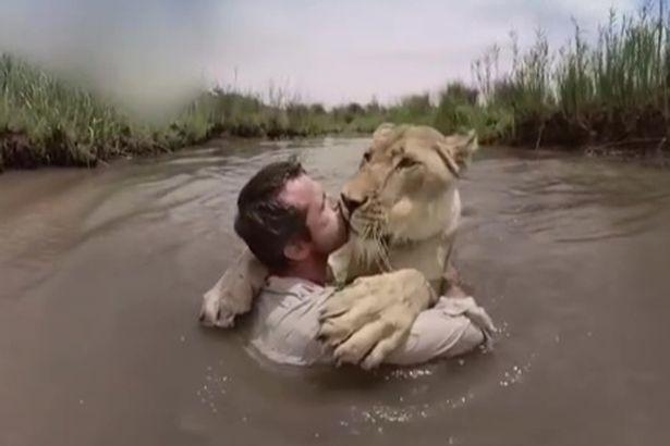 """Sư tử trên bờ """"vồ"""" người đàn ông giữa sông và diễn biến không ngờ - 1"""
