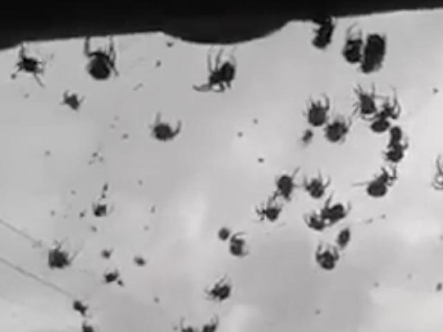 Mở cửa nhà, choáng váng thấy hàng triệu con nhện trước mặt