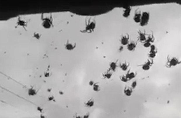 Mở cửa nhà, choáng váng thấy hàng triệu con nhện trước mặt - 1