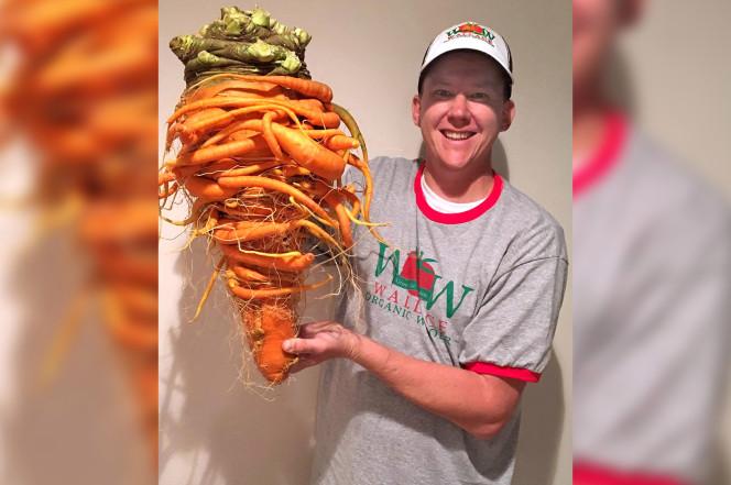 Củ cà rốt khổng lồ quái dị nặng nhất thế giới - 1