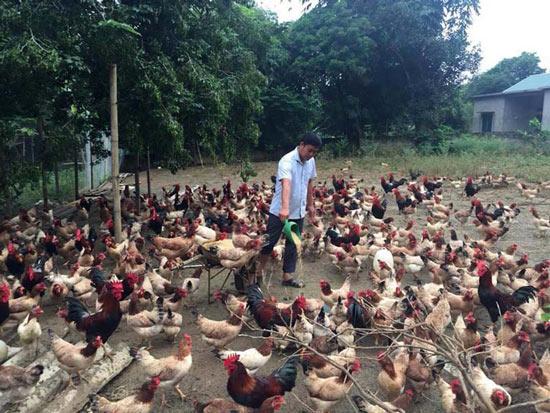 Bộ đội xuất ngũ về nuôi gà ri, trồng dưa mà thành tỷ phú - 1