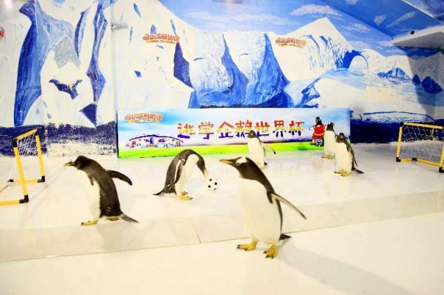Bảo tàng Trung Quốc hút khách nhờ giải World Cup dành cho... chim cánh cụt - 1