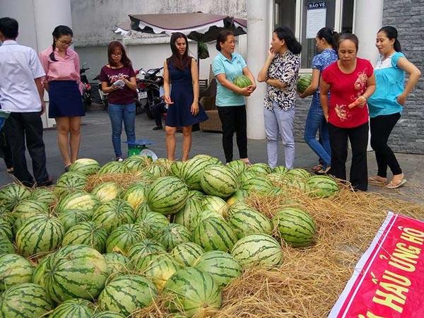Dứa ở Thanh Hóa vứt đi, ở Hà Nội người dân phải mua 11.000 đồng/quả - 1