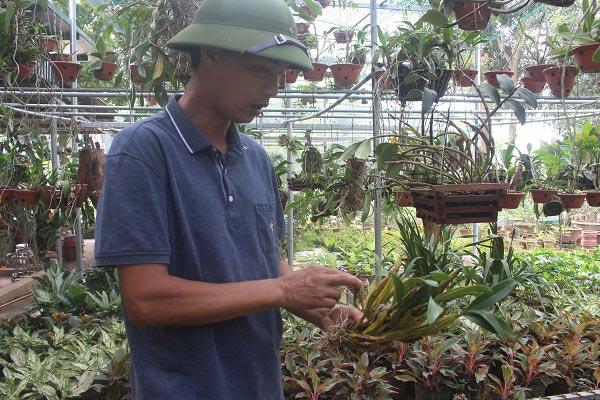 Phú Thọ: Vườn 3.000m2 trồng các loài hoa, mỗi năm thu 700 triệu đồng - 1