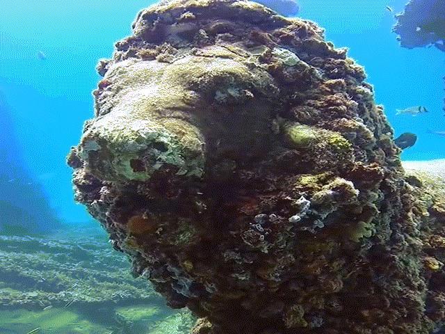 Khám phá tuyệt tác nghĩa trang hàng nghìn năm dưới đáy biển