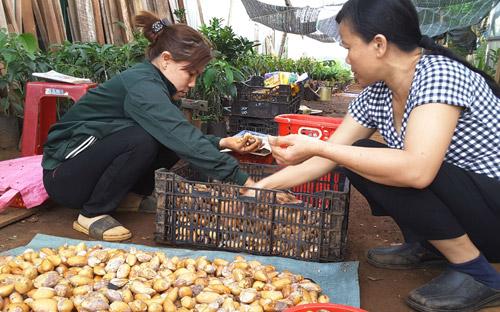 Tư thương Trung Quốc mua hạt sầu riêng để trồng ở Lào, Campuchia? - 1