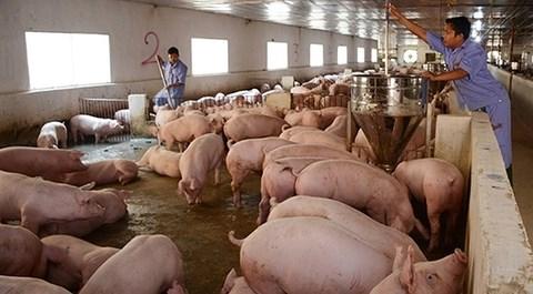 Giá lợn hơi tăng mạnh, thịt lợn nhập khẩu giá bèo 1,5 USD/kg tràn vào - 1