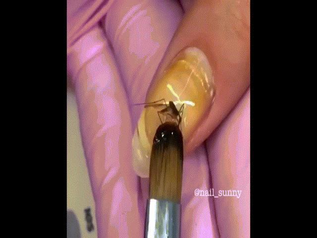 Nghệ thuật làm đẹp kiểu mới: Sơn móng tay bằng xác côn trùng