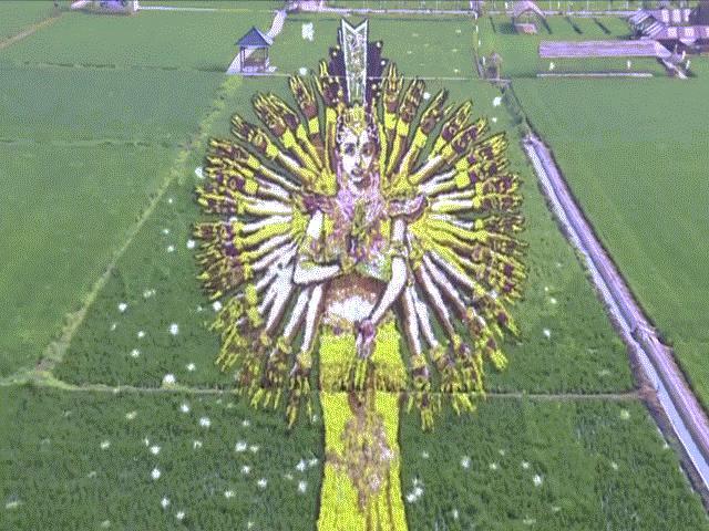 """Nông dân tạo ra """"bức tranh"""" 3D khổng lồ trên cánh đồng lúa"""