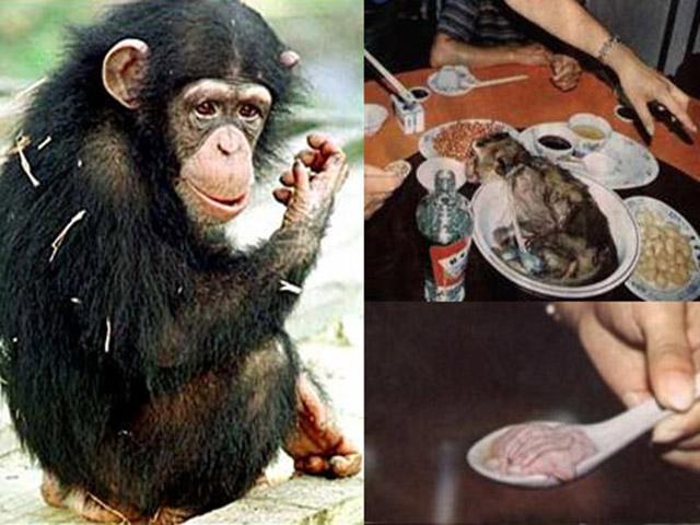 Óc khỉ tươi, món ăn tàn bạo khiến ai cũng thấy ghê sợ