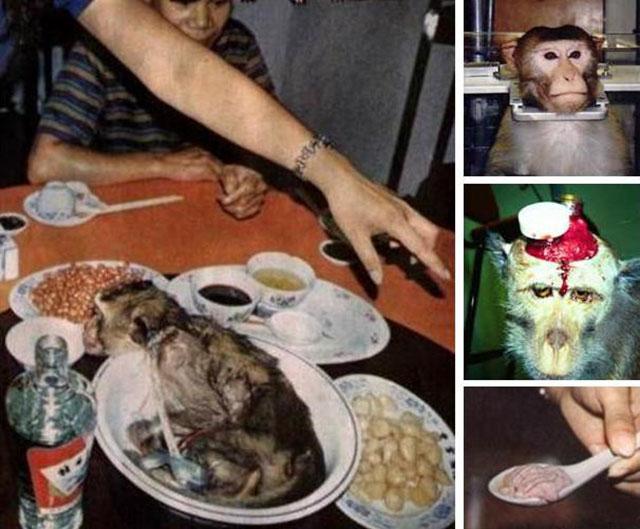Óc khỉ tươi, món ăn tàn bạo khiến ai cũng thấy ghê sợ - 1