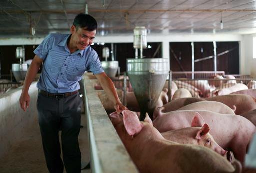 Giá lợn hơi tăng, Cục Chăn nuôi khẳng định ngành nuôi lợn thắng lớn - 1