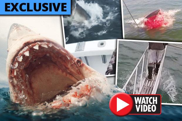 Mỹ: 4 vụ cá mập sát thủ tấn công trong một tuần gây kinh hãi - 1