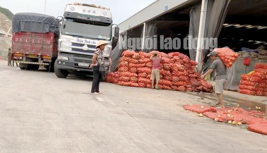 VIDEO điều tra: Đường đi của nông sản Trung Quốc nhái Đà Lạt - 1