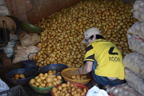 Liên tiếp phát hiện khoai tây Trung Quốc giả Đà Lạt bán đại hạ giá - 1