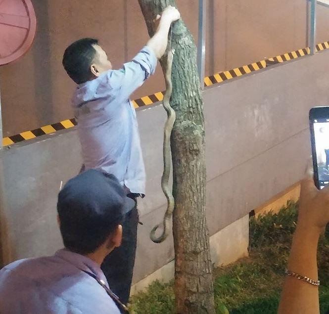 Hà Nội: Bé trai bị rắn cắn khi chơi ở công viên Linh Đàm - 1