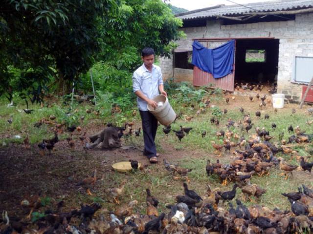 Thả gà trên rừng Chí Linh, mới 10 năm đã thành tỷ phú