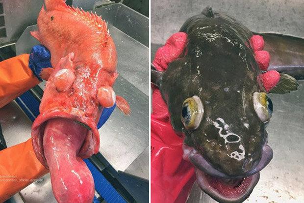 Những quái vật biển sâu kỳ quái nhất trên Trái đất - 1