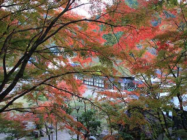 """Mùa này đến Nhật Bản nhất định phải tới """"thiên đường mùa thu"""" ngắm lá chuyển màu"""