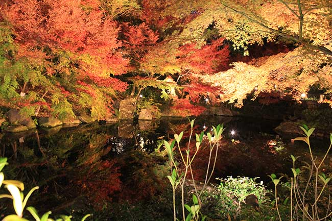 """Mùa này đến Nhật Bản nhất định phải tới """"thiên đường mùa thu"""" ngắm lá chuyển màu - 1"""