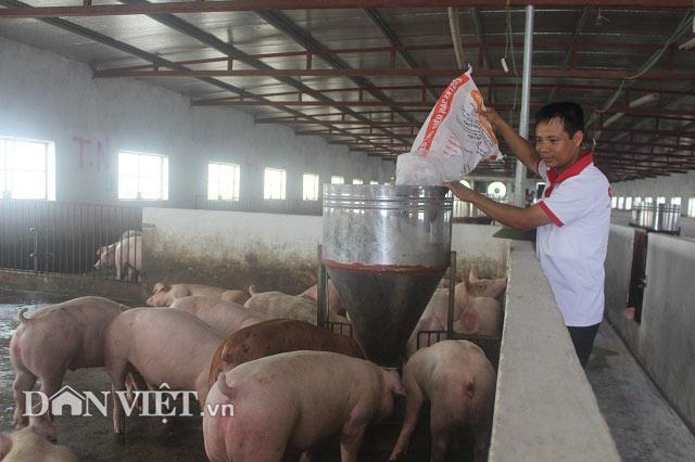 Giá heo hơi hôm nay 10/9: 3 miền tăng đồng loạt, ngành chăn nuôi trên đà trở lại hoàng kim? - 1