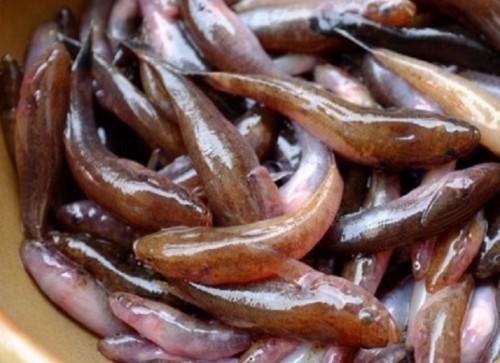 Cách làm cá bống kho tiêu siêu ngon - 1