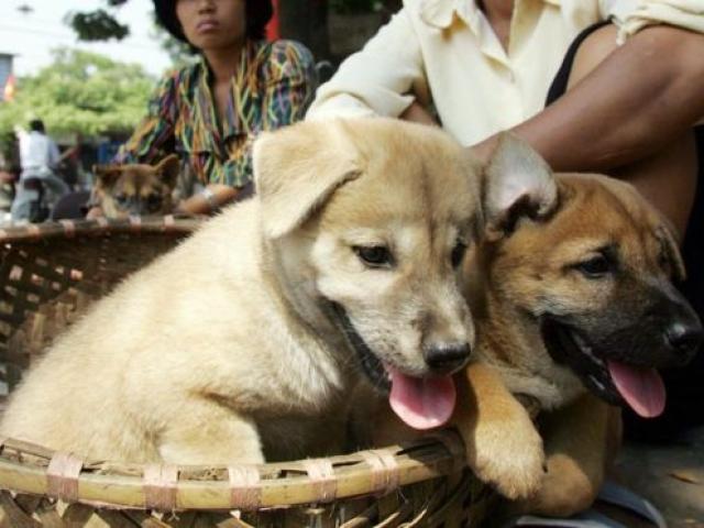 Hàng loạt báo nước ngoài đưa tin Hà Nội kêu gọi ngừng ăn thịt chó