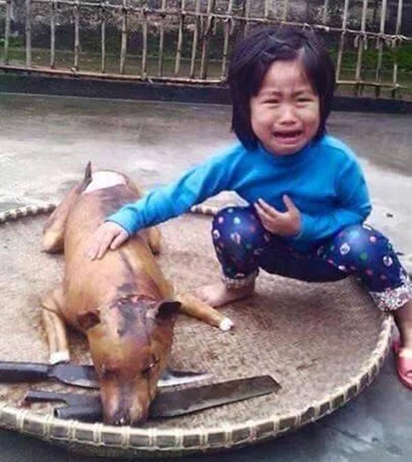 Từ bỏ sở thích nuôi chó vì ám ảnh thú cưng bị giết thịt - 1