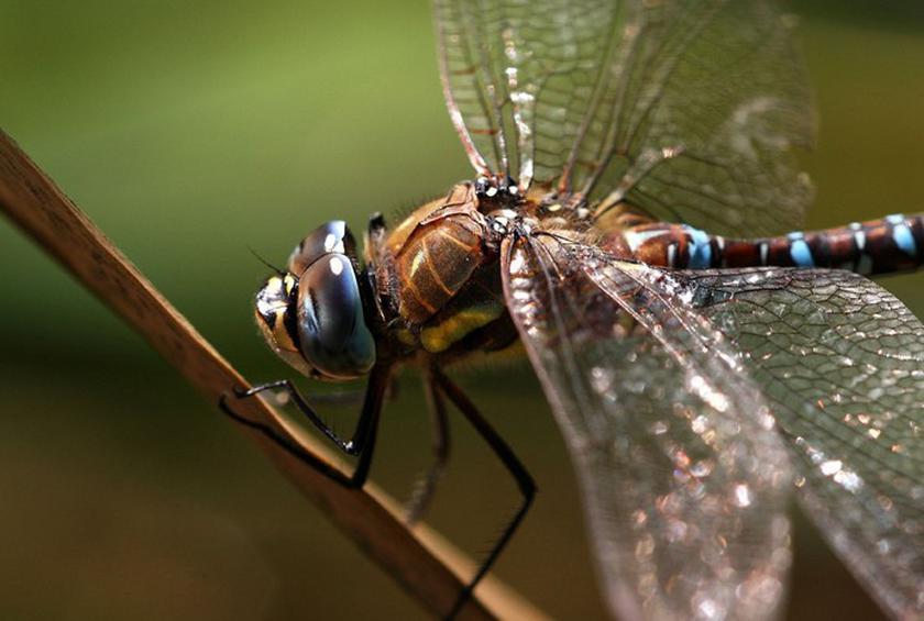 Mọi người sợ chết khiếp trong khi 2 tỷ người ăn những loại côn trùng này mỗi ngày - 1