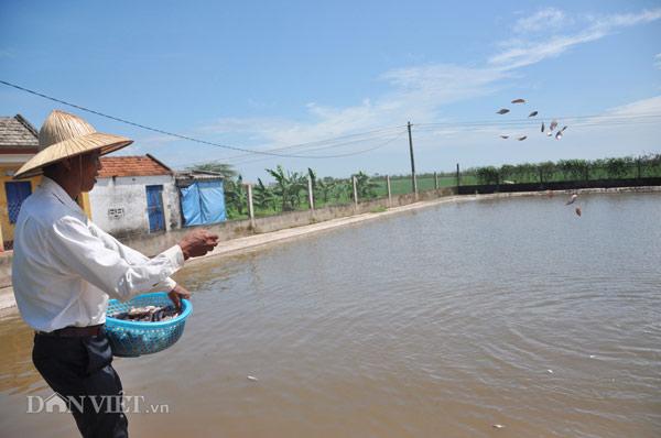 """Ninh Bình: Lão nông kiếm tiền tỷ nhờ """"con trơn nhớt"""" - 1"""
