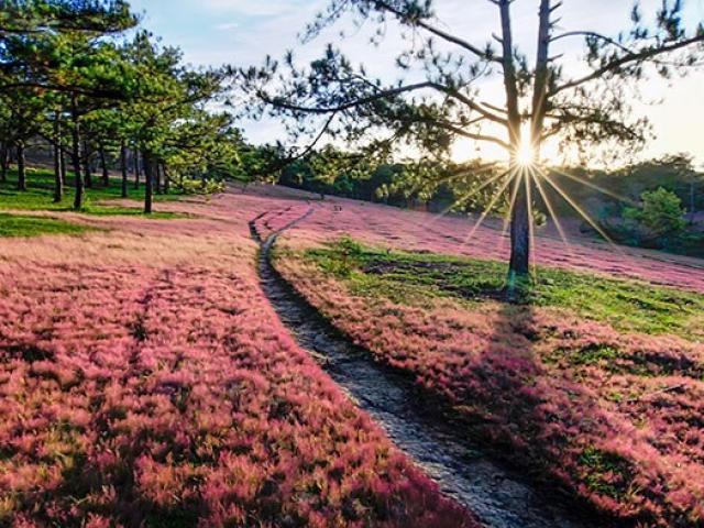 """Thu về đừng quên buổi hẹn với """"mùa cỏ hồng"""" Đà Lạt"""