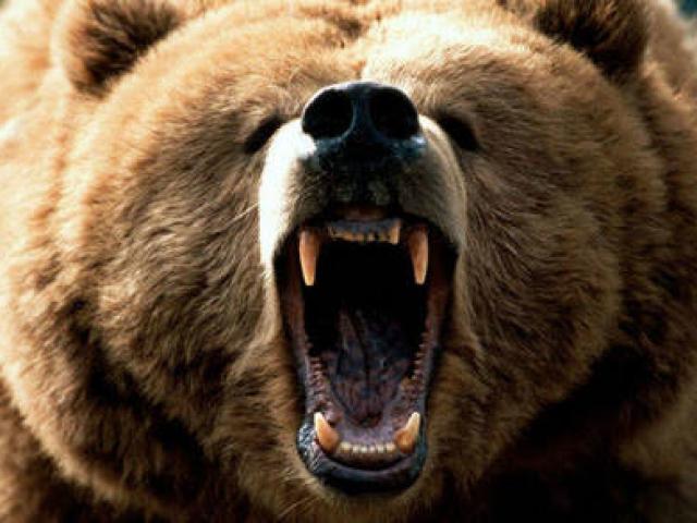 Người đàn ông Nga cắn lưỡi gấu nâu nặng 5 tạ kể lại giây phút sinh tử