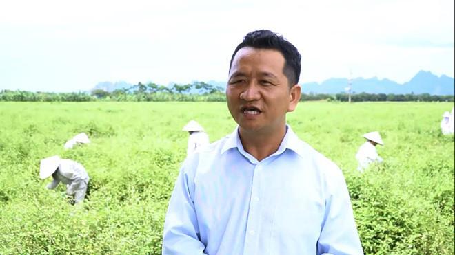 Cà gai leo Tuệ Linh – Vùng trồng đạt tiêu chuẩn khắt khe về dược liệu cho người bệnh gan - 1
