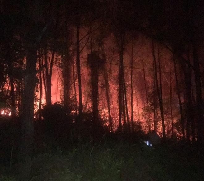 Cháy rừng thông gần Lăng vua Khải Định - 1