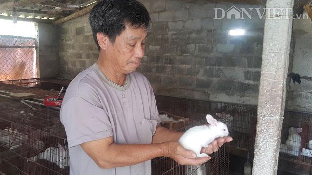 Nuôi bạt ngàn thỏ và ếch, lão nông Ninh Bình thành triệu phú - 1