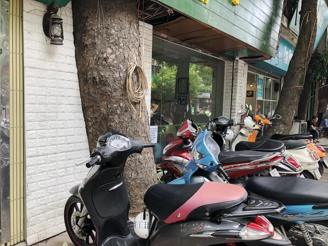 """Một chủ của cửa hàng kinh doanh quán cafe tại khu tập thể này cho biết: """"Cây cổ thụ mọc xuyên vào nhà không có gì bất tiện. Ngược lại, chúng còn tạo bóng mát và giúp quán có không gian độc đáo mà ít nơi nào có được""""."""