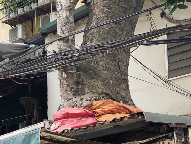 Người dân phải dùng bao, túi bọc thân cây để hạn chế nước mưa chảy vào nhà.
