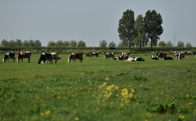 Di sản 145 năm kiến tạo sữa tươi tiêu chuẩn Hà Lan - 1