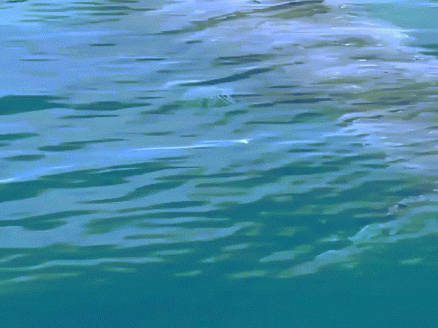 Chĩa camera xuống nước, hoảng hồn phát hiện cá mập khổng lồ dài 7 mét
