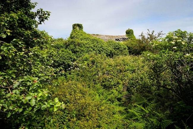 Ngôi nhà Lavender Cottage nằm ở Cornwall, Anh đang được rao bán với giá 235.000 bảng Anh (~6,8 tỷ đồng).