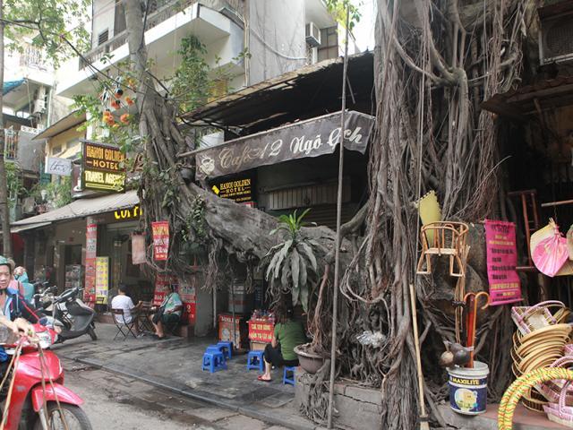 """Những cây cổ thụ """"kỳ dị"""" mọc giữa nhà, giữa phố Hà Nội"""