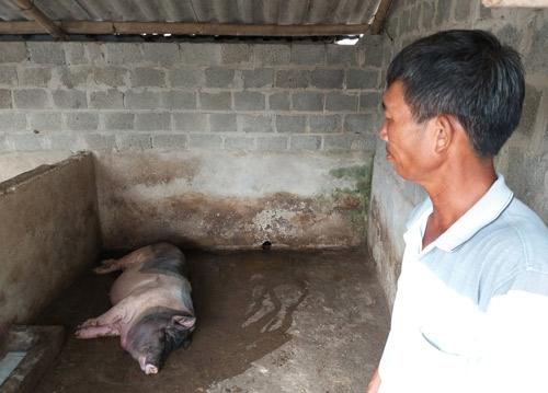 Ninh Bình: Từ tỷ phú giàu nhất huyện thành con nợ vì dịch tả lợn - 1