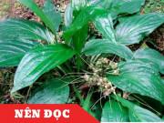 Tin tức sức khỏe - Việt Nam: Phát hiện thảo dược dễ kiếm giúp kiểm soát tiểu đêm, tiểu nhiều lần
