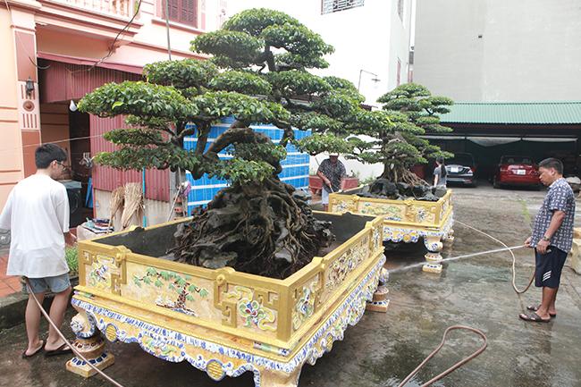 Anh Phan Văn Toàn (TP. Việt Trì, Phú Thọ), chủ sở hữu cặp sanh độc đáo này cho biếtđây là cặp sanh rất nghệ thuật và có tuổi đời gần 100 năm.