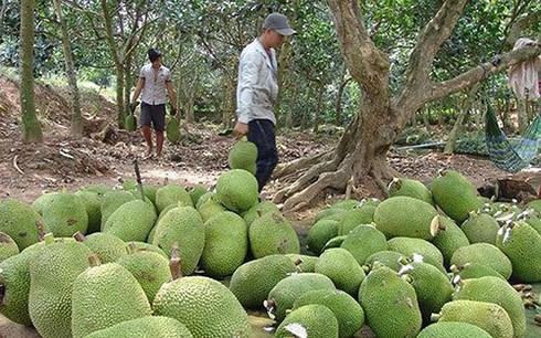 Trung Quốc siết chặt, giảm mạnh nhập khẩu, nông sản Việt lao đao - 1
