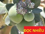 """Tin tức sức khỏe - Báo Mỹ bất ngờ công bố công dụng """"tiêu diệt"""" đờm, ho, khó thở của loại cây mọc ven đường ở Việt Nam"""