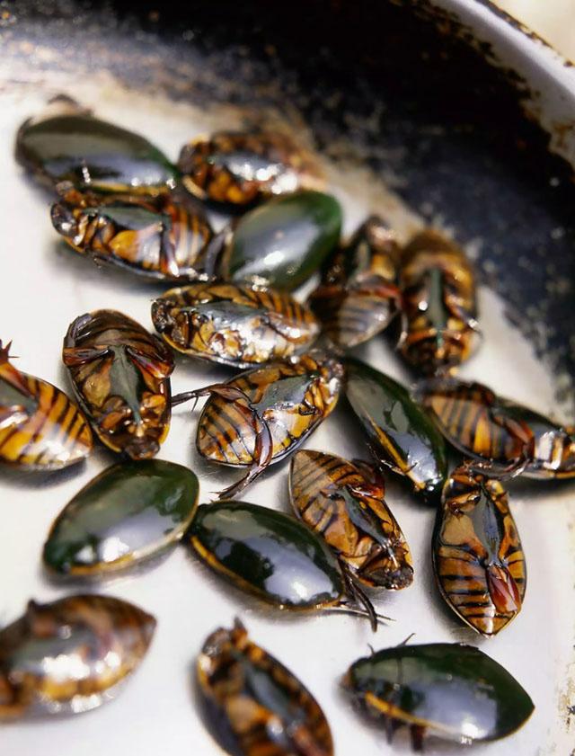 6 loại côn trùng có độ an toàn cao nhất cho người ăn - 1